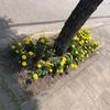 枯れた花は誰の為?