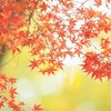 勝林寺の吉祥紅葉2019。秋の特別公開とライトアップ。