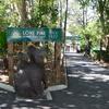 コアラのための動物園