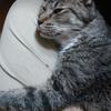 猫、余命宣言