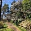 小石川植物園6