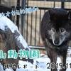 【過去レポ#2】冬の動物園は素晴らしい!旭山動物園現地レポート(2019/11/28)