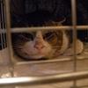 2012 4月 のら猫手術。