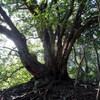 鬼ヶ島から六甲最高峰へのハイキング(その2)鬼ヶ島