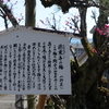 徳乗寺の梅