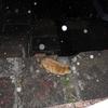 1月後半の #ねこ #cat #猫 その1