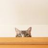 若者文化・・・かもしれません、DISHの猫を1年くらいずっと聞く。音楽の話よ?