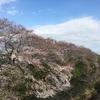 2018/3/24 尾根幹+小山田3周+連光寺坂