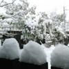 大雪警報発令中!