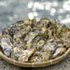 【ふるさと納税】牡蠣の艶やかさに悶絶!福岡県糸島(いとしま)産の殻付き牡蠣が届きました〜!