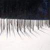 王滝村の自然湖にて、立ち枯れの木を撮影しました