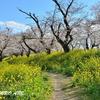 埼玉県北本市の「北本自然観察公園」の春