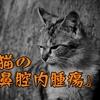 猫の鼻腔内腫瘍(鼻腔内リンパ腫)