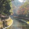 京都の旅 by Goto 2020.11.24-27 Ara-kanふたり旅 3日目〔前編〕 この旅いちばんの散歩道・山科疎水と、毘沙門堂ガイド