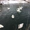 高齢の元バレエダンサーが踊る『白鳥の湖』