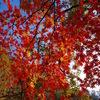 星のブランコと磐船神社に紅葉を見に歩く