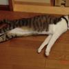 ぶり返す暑さおネコさま。