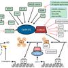 CDK4/6 阻害剤:パルボシクリブ、アベマシクリブ
