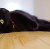 今日の黒猫モモ&白黒猫ナナの動画ー793