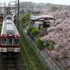 2019年の桜 ア・ラ・カルト 近鉄田原本線 復刻塗装