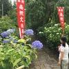 村木沢の紫陽花を見に行きました。漢方相談会のお知らせも