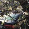 ヨルダンの春到来