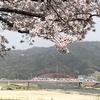 安芸大橋は、我が国初の本格的ニールセンローゼ橋です。桜がよく似合います。