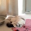 猫 避妊手術4日後
