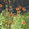霊園風景 その8 「夏を彩る草花たち」