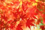 秋の京都で癒される!ゆったり縁側に座って紅葉を眺められる名所8選