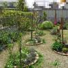 東側並木の新緑