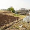 緑が目立ち始めた ~ラボ2畑の小麦、ライ麦、スペルト小麦~