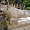 三室戸寺の狛牛。宝勝牛で勝運を祈願。