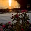 大藻路岩灯標の落陽