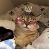 【猫画像】猫との約束を守れず妻と外出してしまう話し