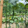 3代目の無農薬畑の野菜たち🍅