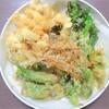 素人が山菜を採って食う ~山菜の天ぷら~