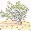 七年間乾いた木アルガンが再び花を咲かせる時ー病気という苦境を乗り越えるために