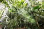 """アマゾンが新オフィスを """"植物だらけ"""" にした興味深い理由。視界のグリーンがもたらすメリットがすごい!"""