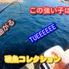 磯釣りの外道って強いよね?w磯魚コレクション動画&オススメ釣り動画チャンネル