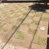市松模様に植えてみました~☆