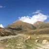 チベットのトイレ事情