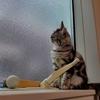 【猫のあるある】可愛い仕草や様子を紹介
