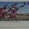 等高線にそって1万7千本のさくらなみき - 桜ライン311