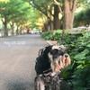 【お散歩】週末のお散歩
