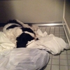 僕の 寝床は お風呂場⁈
