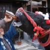 COW BEER