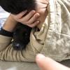 甲斐犬サンのハニートラップ!の巻〜任セテッ٩( 'ω' )و