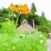 【写真】スナップショット(2017/8/12)美山かやぶきの里その3