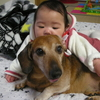 人は犬に育てられている。私はそんな風に思う。 ~娘の成長、そして歳をとった愛犬~